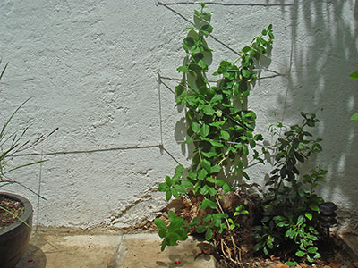plants strung up against the wall
